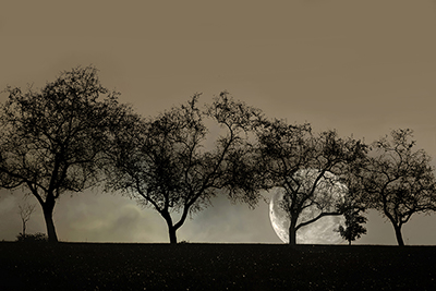 Four Trees and a Moon